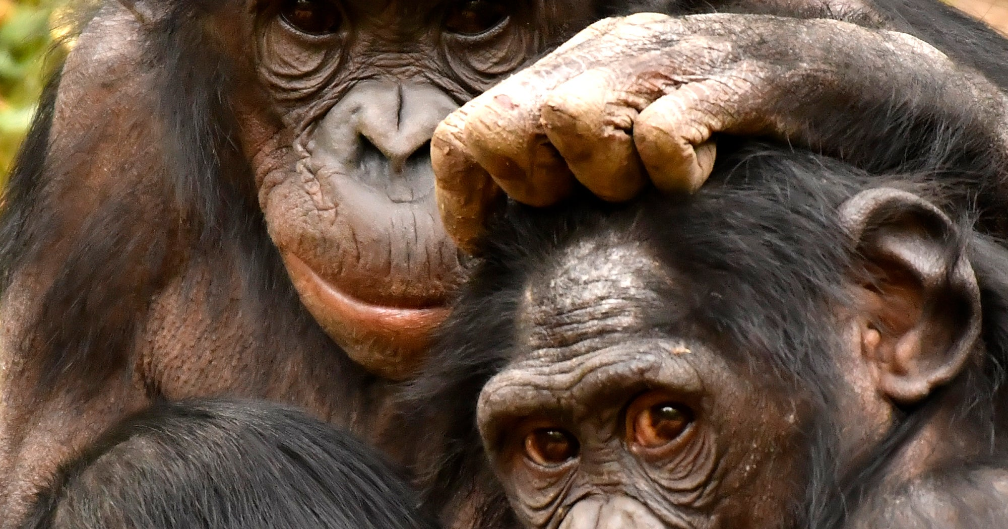 What Hyper-Sexual Bonobos Can Teach Women About Sex